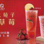 來大苑子採草莓!! 11.10起全台限店販售